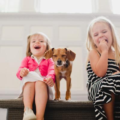 Nina the Miniature Beagle