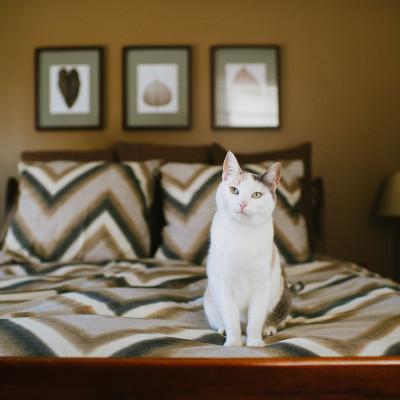 Vera the Cat