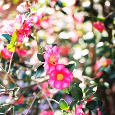 Louisiana Spring