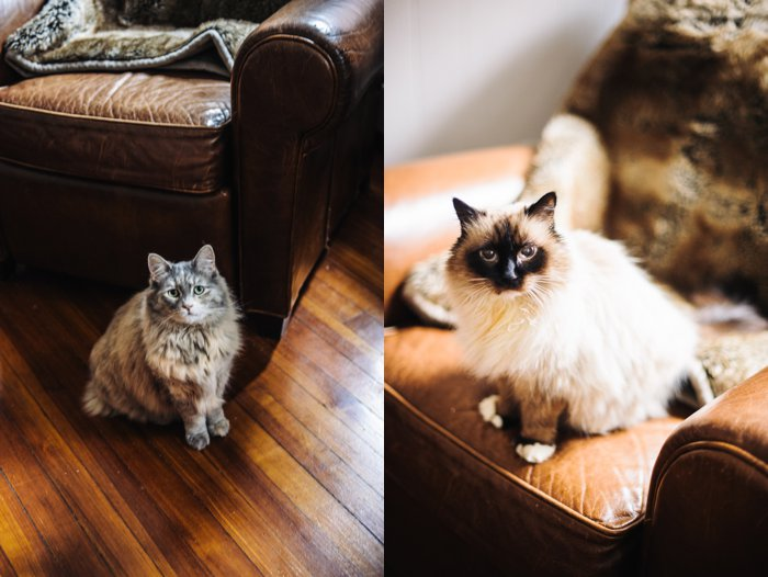 bhcats__0001.jpg
