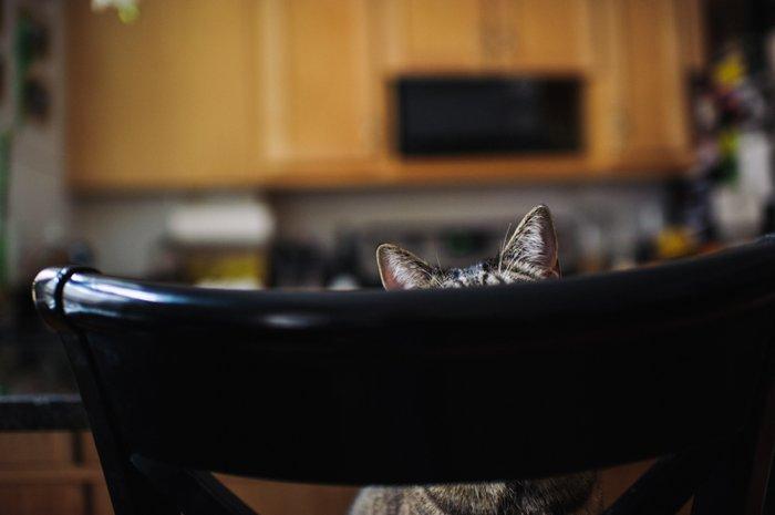 bhcats__0002.jpg