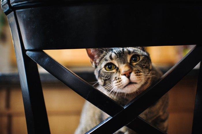 bhcats__0003.jpg