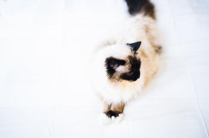 bhcats__0004.jpg