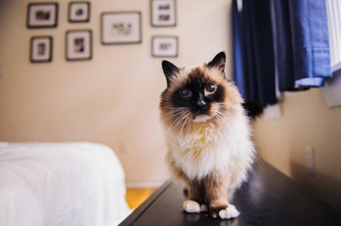 bhcats__0007.jpg