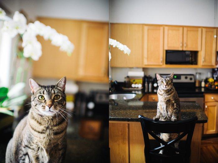bhcats__0008.jpg