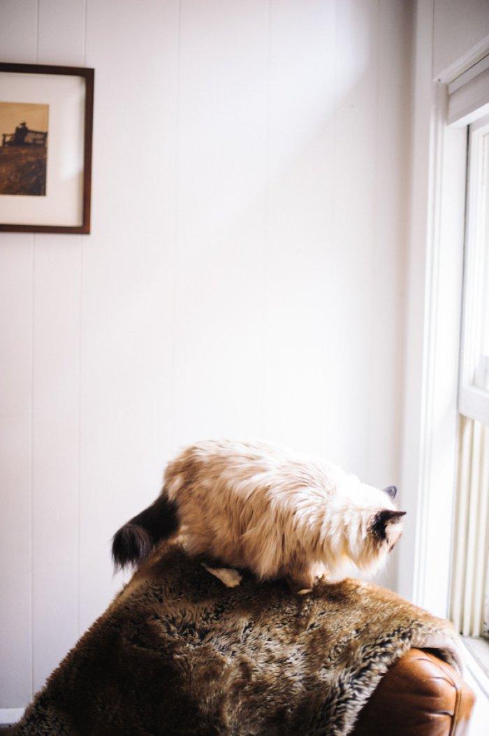 bhcats__0012.jpg