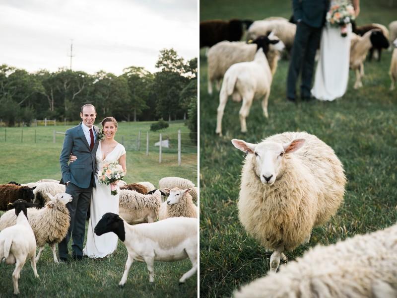 di_molly_sheep_fatorangecat